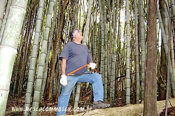 Fazendo sua vara de bambu - Tipos de bambu ...